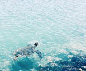 turtle, summer, and sea image