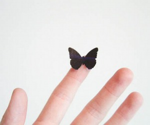 butterfly, indie, and pale image