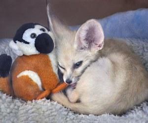 fox, cute animals, and fennec fox image