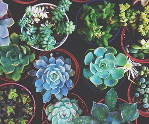 plants, cactus, and green image