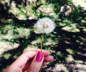blow, dandelion, and wish image