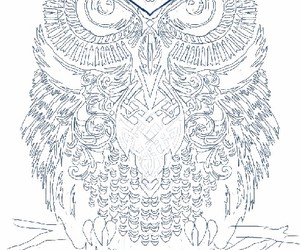 owl, wallpaper, and wallpapers image