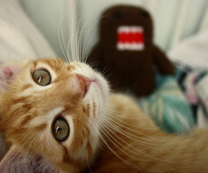 cat, domo, and kitten image