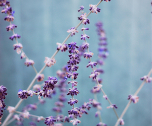 beautiful, blue, and lavender image