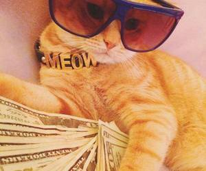 cat, money, and meow image