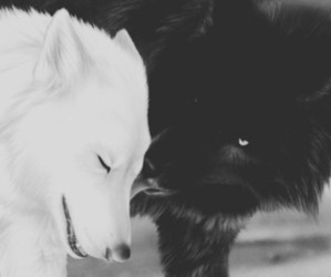 black and white, wolf, and love image
