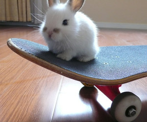 bunny, cute, and skate image