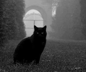 cat, black cat, and black image