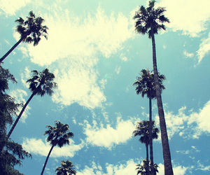 sky, summer, and palms image