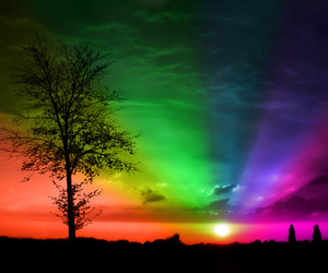 rainbow, tree, and colors image