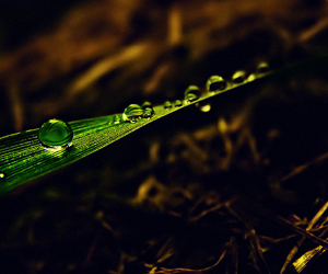 droplet, macro, and nature image