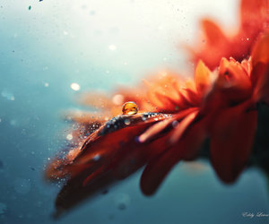 beautiful, droplet, and flower image