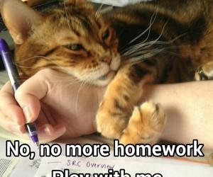 cat and homework image