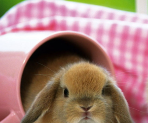 bunny, rabbit, and pink image