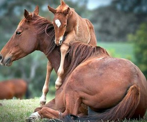 horse, cute, and beauty image