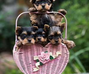 puppies and tiny pups image