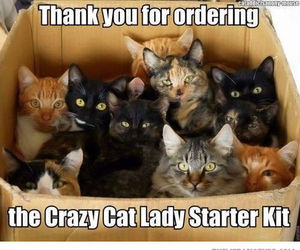 cats, fun, and crazy image