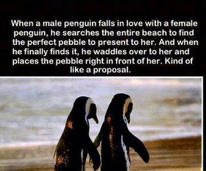 penguin, love, and proposal image