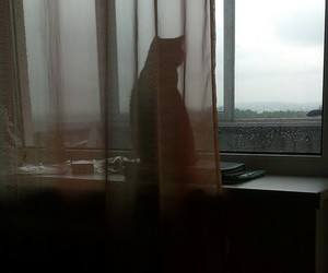 cat, poet, and sky image