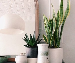 decor, plants, and design image
