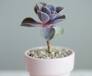 indie, plants, and pink image