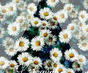 background, vintage, and daisy image