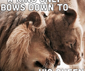 lions, love, and quotes image