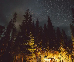 stars, night, and forest image