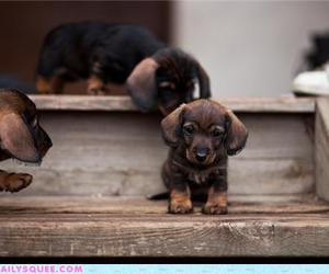 dog, puppies, and step image