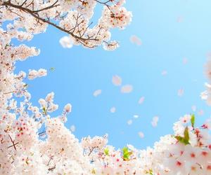 primavera, sakura, and season image