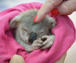 Koala and cute image