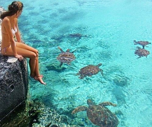 turtle, summer, and sea image