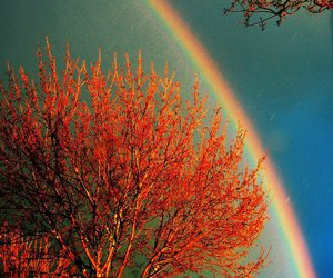 rainbow, tree, and nature image