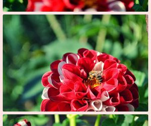 beautiful, bee, and cool image
