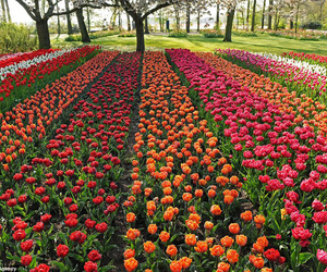 flower, garden, and nature image