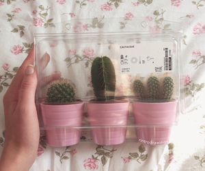 cacti, floral, and pale image