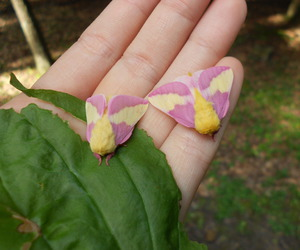 color, moths, and insects image