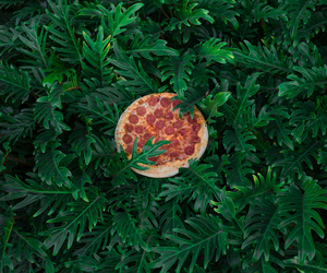 pizza and plants image