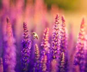 amazing, bee, and beautiful image