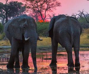 elephants, sunset, and animals image