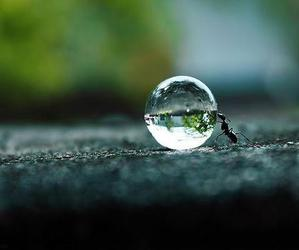 water ant drop bubble image