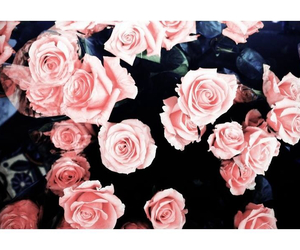 pretty, rose, and love image