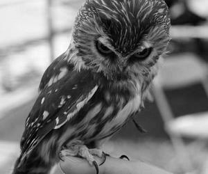 bird, claws, and eyes image