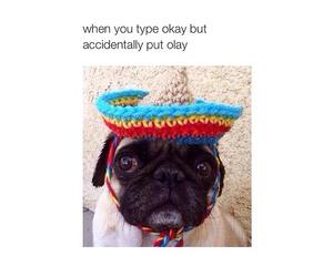 funny, dog, and olay image