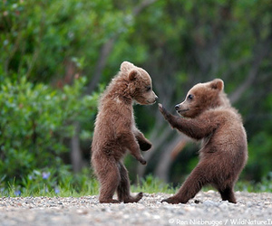 animals and little bear image