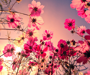 flowers, sun, and wild image