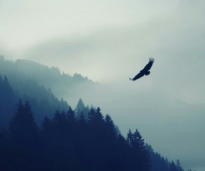 bird, nature, and forest image