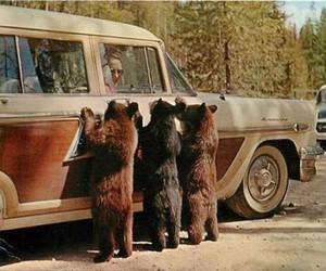 bear, car, and vintage image