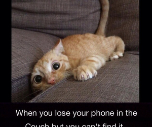 funny and cat image
