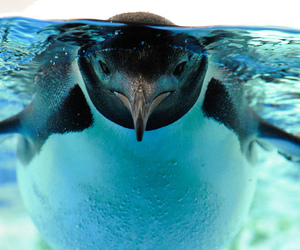 penguin, animal, and water image
